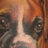 melissa-fusco-boxer-puppy-tattoo-web