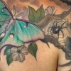 melissa-fusco-haunted-house-stella-luna-bat-tattoo-luna-moth-colorado-artist-web