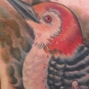 melissa-fusco-in-progress-woodpecker-tattoo-web
