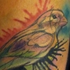 melissa-fusco-virgina-watercolor-bird-tattoo-web