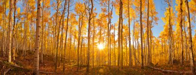 fall-aspens-post-photo