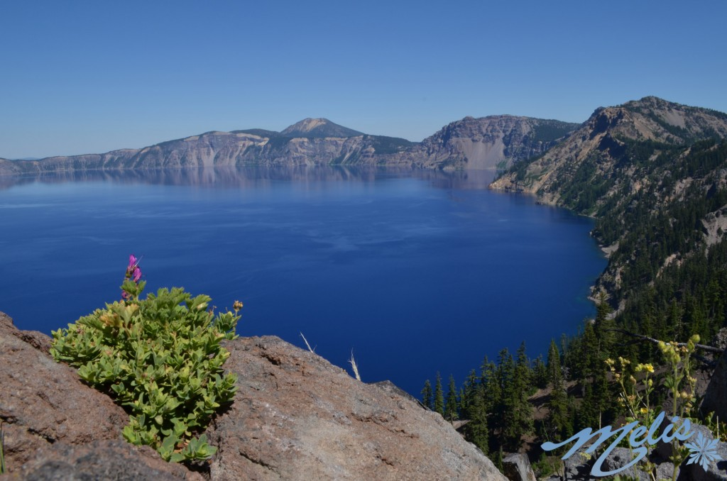crater-lake-with-flower-web